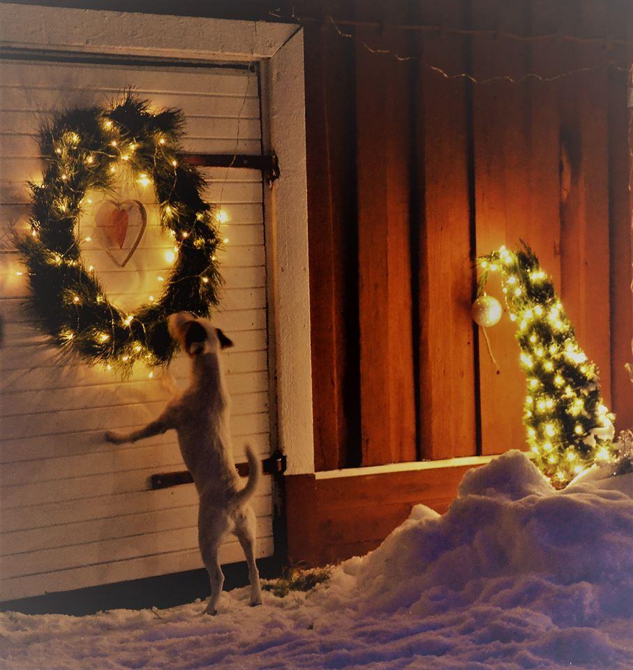 jouluapua Jouluapua homeongelman kohdanneelle – Espoon Homekoirat jouluapua