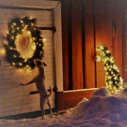Jouluapua